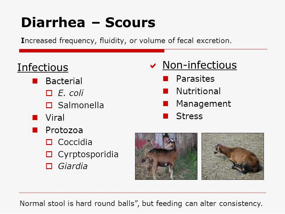 Diarrhea – Scours Increased frequency, fluidity, or volume of fecal excretion.