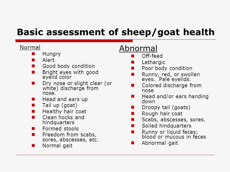Basic assessment of sheep/goat health Normal Hungry Alert Good body condition Bright eyes with good eyelid color Dry nose or slight clear (or white) discharge from nose.