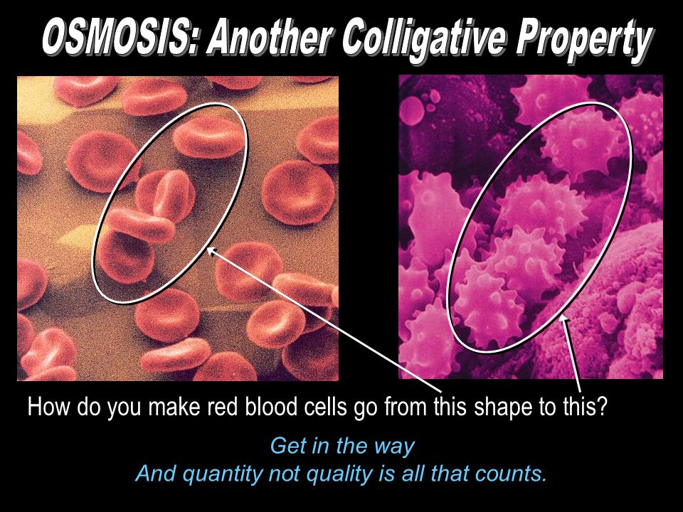 How do you make red blood cells go from this shape to this? Get in the way And quantity not quality is all that counts.