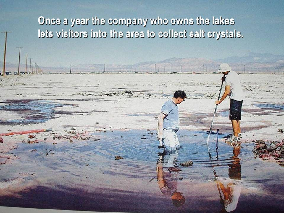 Once a year the company who owns the lakes lets visitors into the area to collect salt crystals.