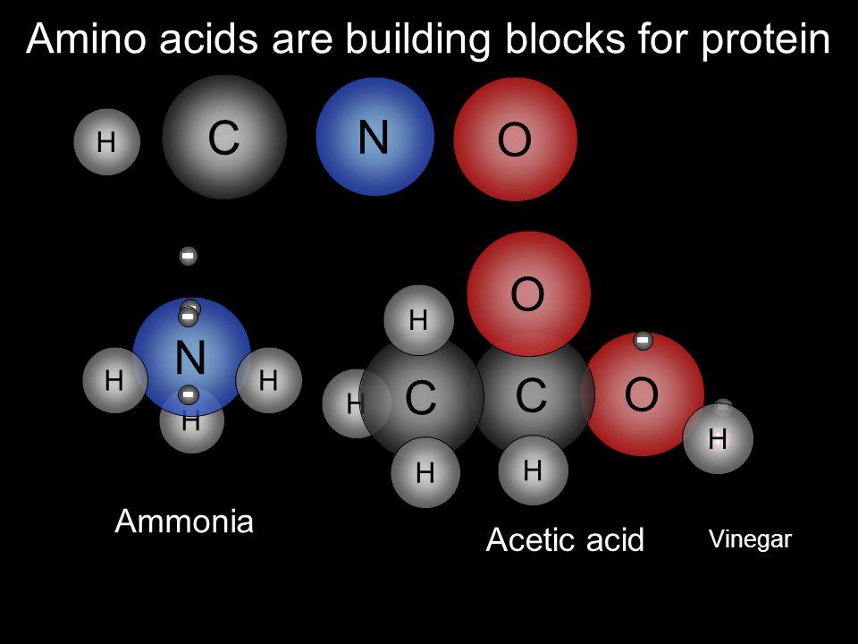 H H H N C O Amino acids are building blocks for protein O C C N O H HH Ammonia Acetic acid Vinegar C H H H