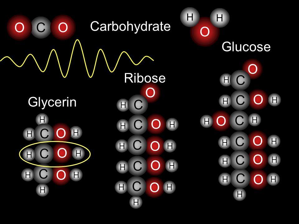 O C Glycerin H H H H H H O C O C C O H H H H O H H O C O C C H H O H H O C C H H Ribose H H Carbohydrate O H H O C O C C H H O H H H O C C H H Glucose