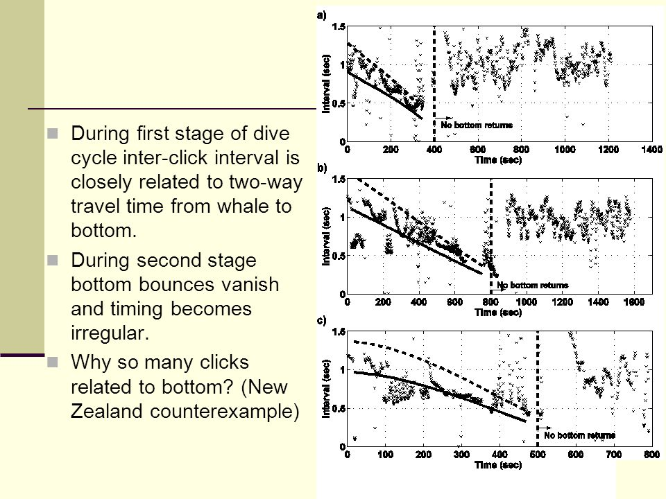 During first stage of dive cycle inter-click interval is closely related to two-way travel time from whale to bottom.