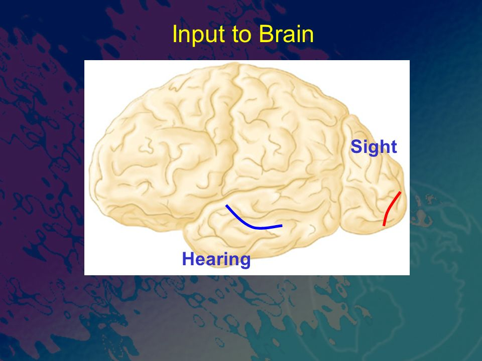 Sight Hearing Input to Brain