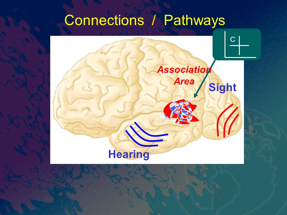 Sight Connections / Pathways Hearing C Association Area
