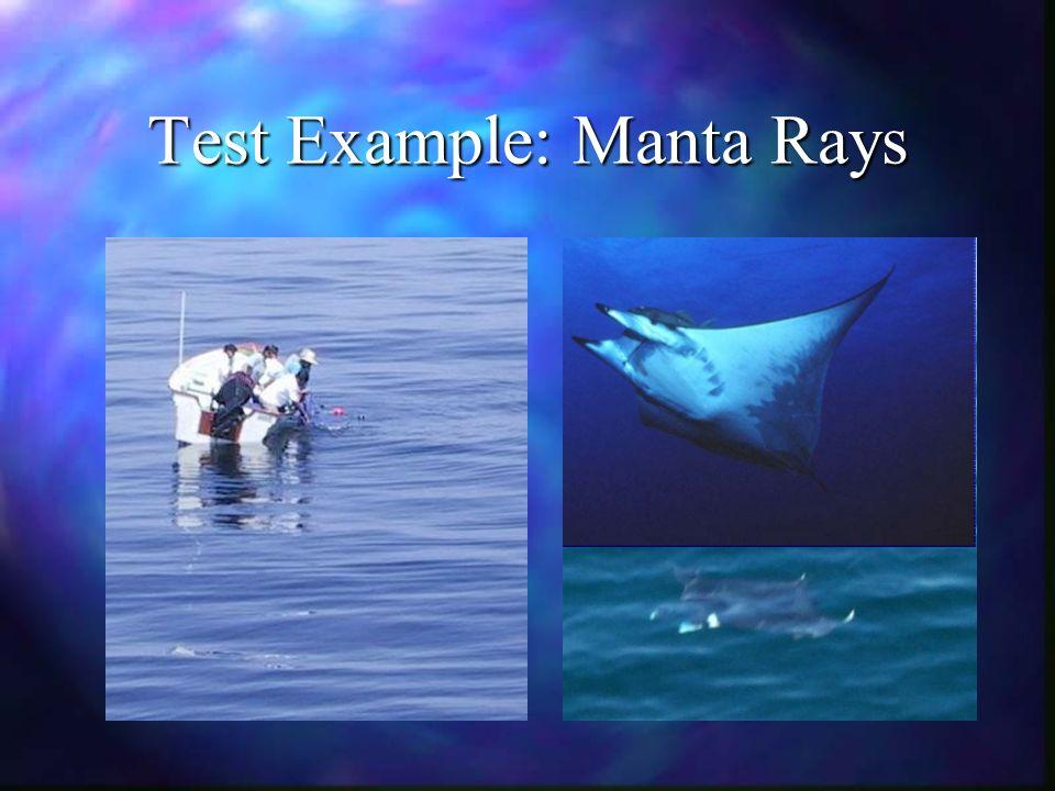 Test Example: Manta Rays