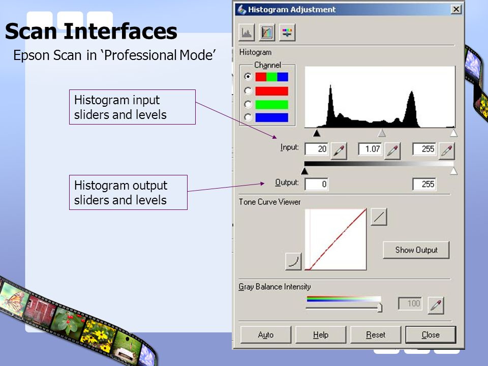 Scan Interfaces Epson Scan in Professional Mode Histogram input sliders and levels Histogram output sliders and levels