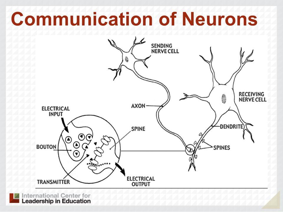 Photograph of Neurons
