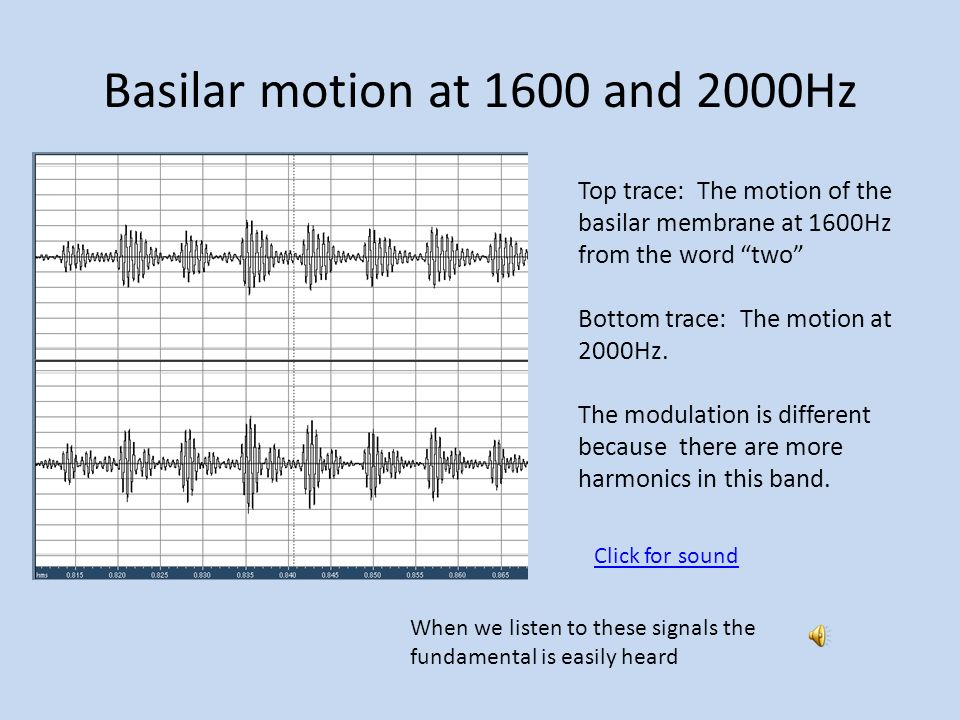 Basilar motion at 1600 and 2000Hz Top trace: The motion of the basilar membrane at 1600Hz from the word two Bottom trace: The motion at 2000Hz.