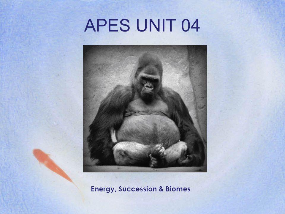 APES UNIT 04 Energy, Succession & Biomes