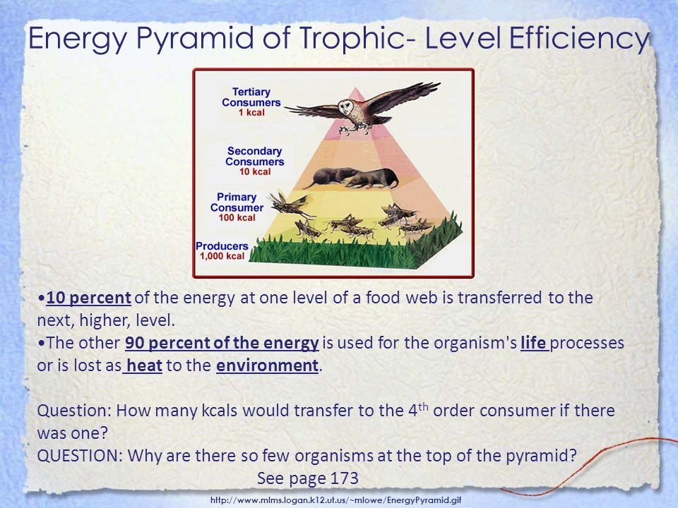 Energy Pyramid of Trophic- Level Efficiency http://www.mlms.logan.k12.ut.us/~mlowe/EnergyPyramid.gif 10 percent of the energy at one level of a food w