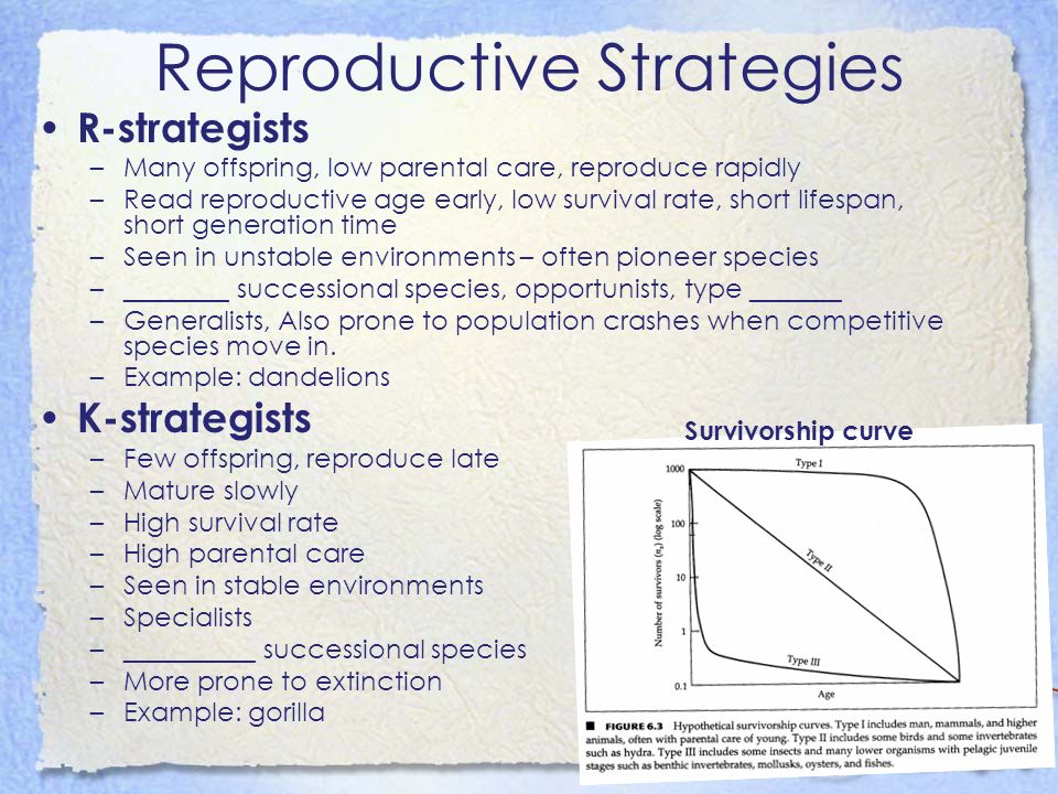 Reproductive Strategies R-strategists –Many offspring, low parental care, reproduce rapidly –Read reproductive age early, low survival rate, short lif