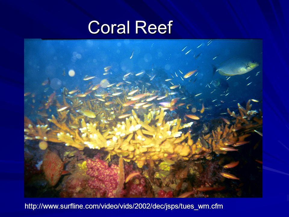 Coral Reef http://www.surfline.com/video/vids/2002/dec/jsps/tues_wm.cfm