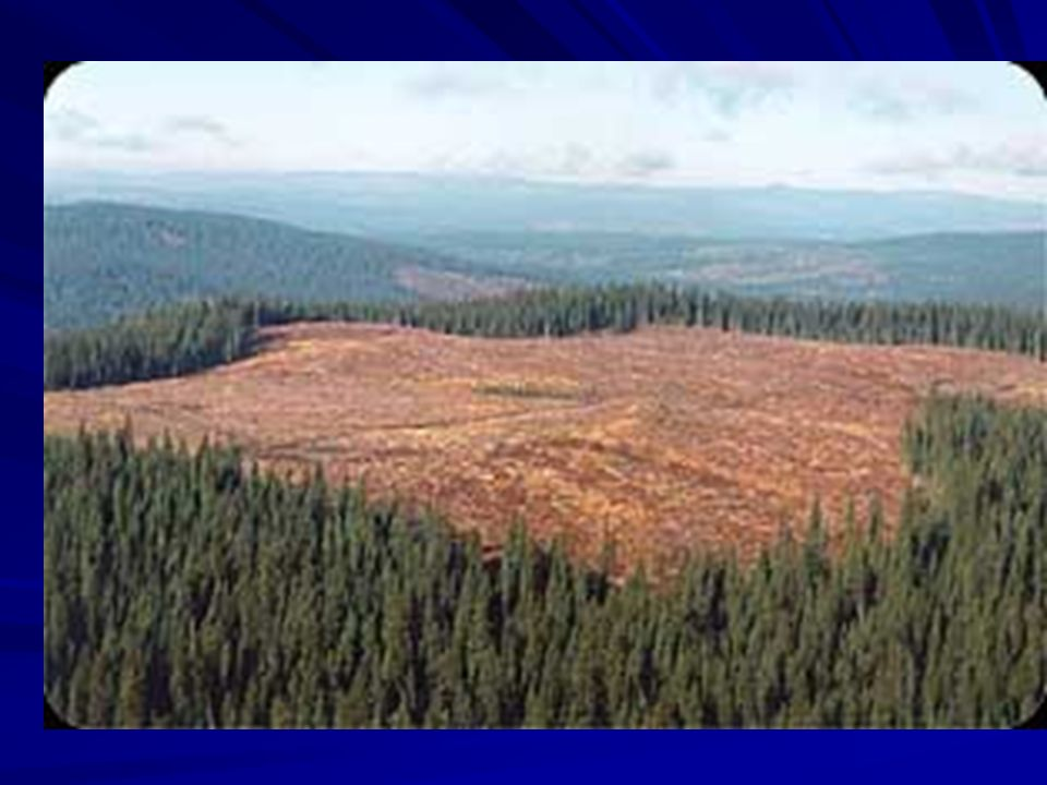 Tundra Annual precipitation 25 cm Cold, treeless Permafrost Home to migratory waterfowl, large mammals and mosquitoes Threatened by mining and oil exploration