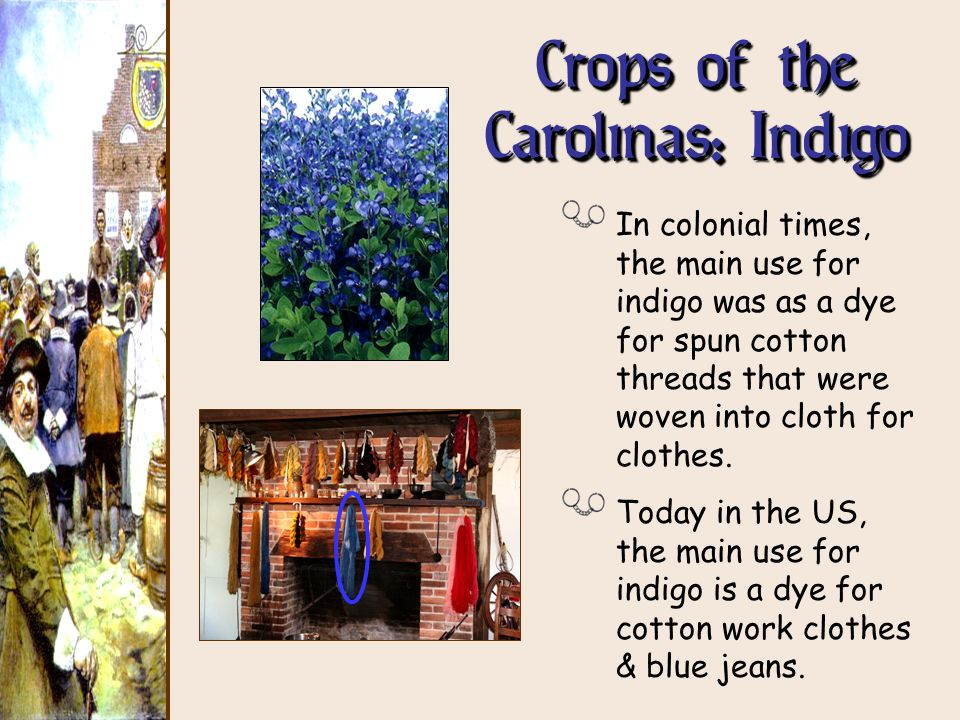 Crops of the Carolinas: Indigo In colonial times, the main use for indigo was as a dye for spun cotton threads that were woven into cloth for clothes.