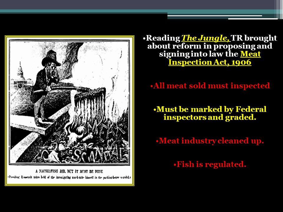 Reading The Jungle, TR brought about reform in proposing and signing into law the Meat Inspection Act, 1906 All meat sold must inspected Must be marked by Federal inspectors and graded.
