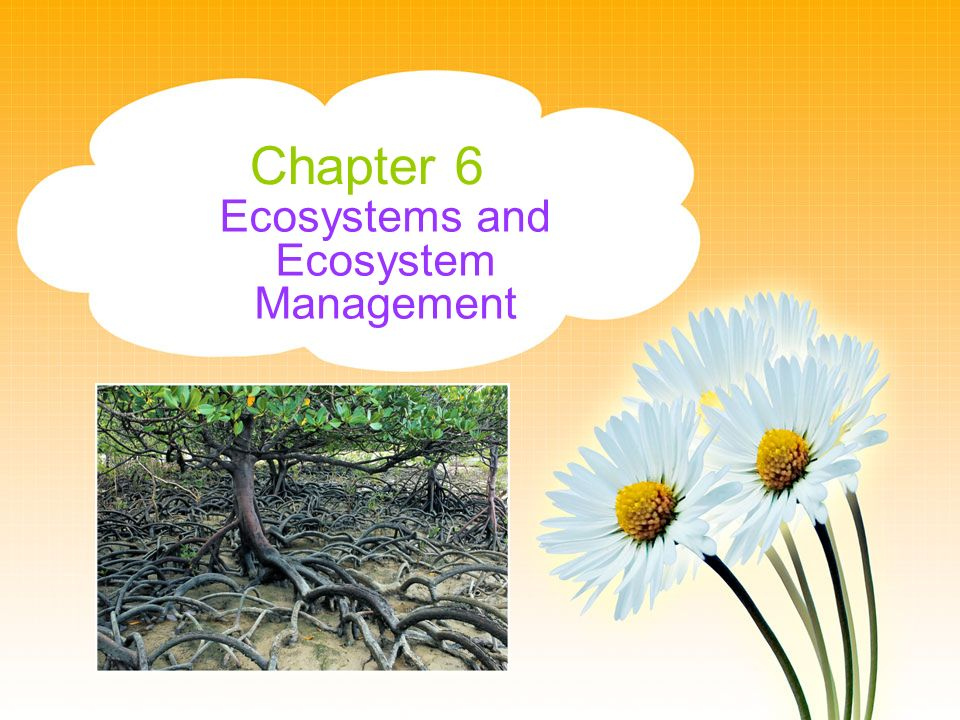 Chapter 6 Ecosystems and Ecosystem Management