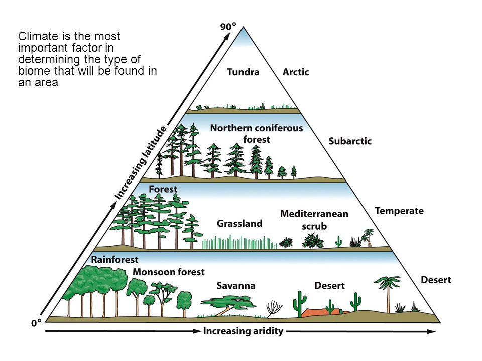 Climate is the most important factor in determining the type of biome that will be found in an area