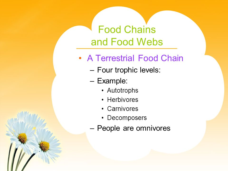 Food Chains and Food Webs A Terrestrial Food Chain –Four trophic levels: –Example: Autotrophs Herbivores Carnivores Decomposers –People are omnivores
