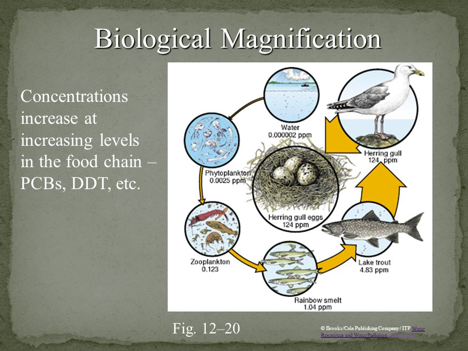 Concentrations increase at increasing levels in the food chain – PCBs, DDT, etc. Biological Magnification Biological Magnification Fig. 12–20 Water Re