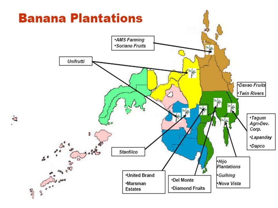 Pineapple plantations in Northern Mindanao KompanyaEktaryaLugar Dole Philippines36,204Dangcagan ug Kibawe, Bukidnon Del Monte Philippines4,019.28Malay