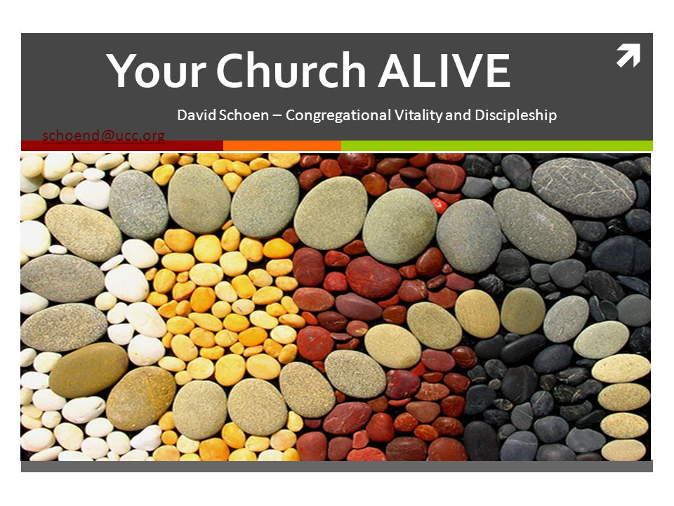 Your Church ALIVE David Schoen – Congregational Vitality and Discipleship schoend@ucc.org schoend@ucc.org