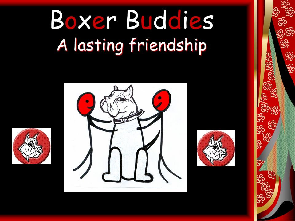 A lasting friendship Boxer Buddies A lasting friendship