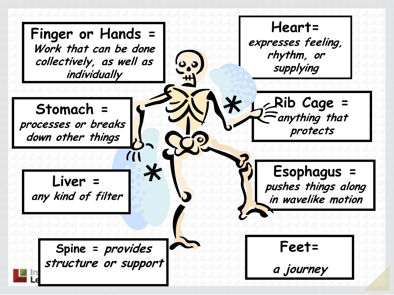 Esophagus = pushes things along in wavelike motion Rib Cage = anything that protects Feet= a journey Heart= expresses feeling, rhythm, or supplying Fi