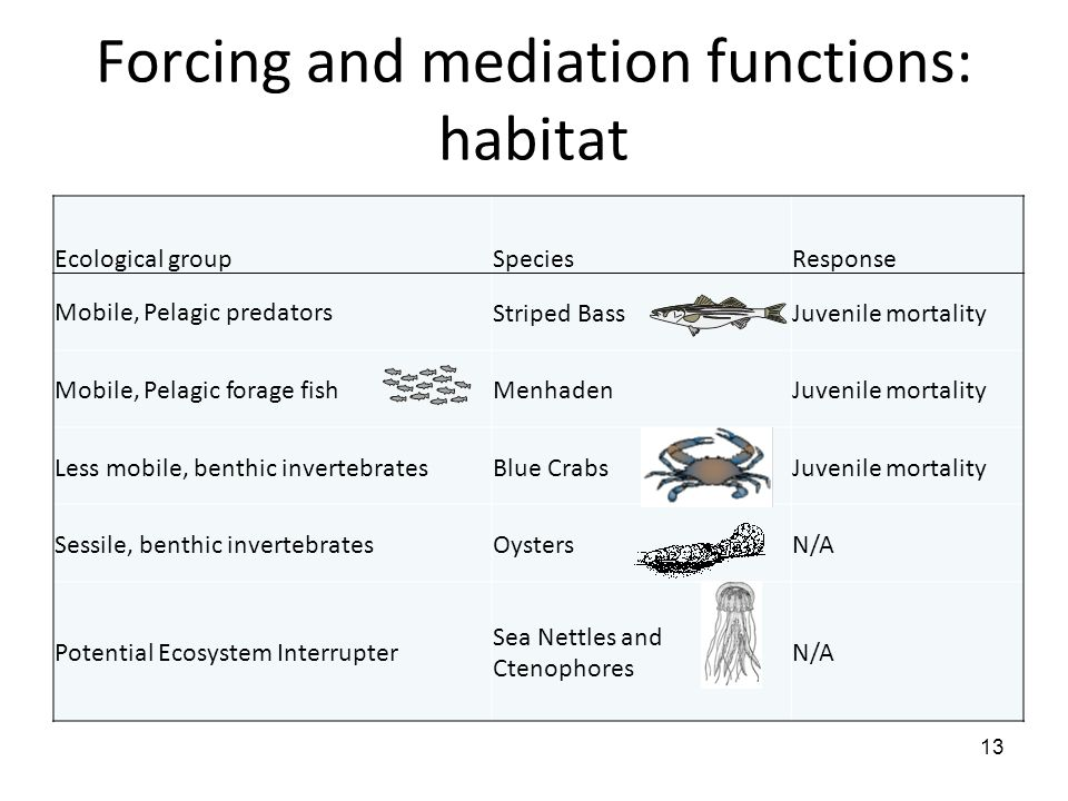 Forcing and mediation functions: habitat 13 Ecological groupSpeciesResponse Mobile, Pelagic predatorsStriped BassJuvenile mortality Mobile, Pelagic fo