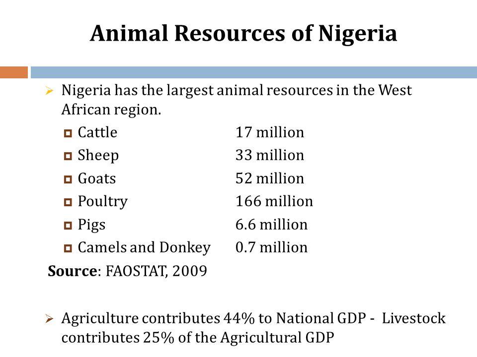 Animal Resources of Nigeria Nigeria has the largest animal resources in the West African region. Cattle 17 million Sheep 33 million Goats 52 million P
