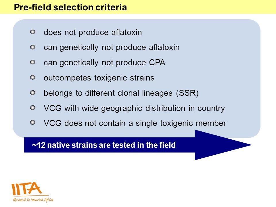 Pre-field selection criteria does not produce aflatoxin can genetically not produce aflatoxin can genetically not produce CPA outcompetes toxigenic strains belongs to different clonal lineages (SSR) VCG with wide geographic distribution in country VCG does not contain a single toxigenic member ~12 native strains are tested in the field