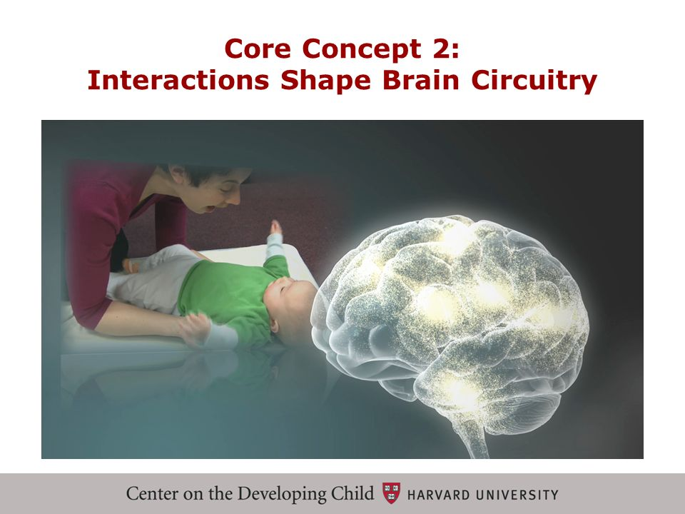 Core Concept 2: Interactions Shape Brain Circuitry