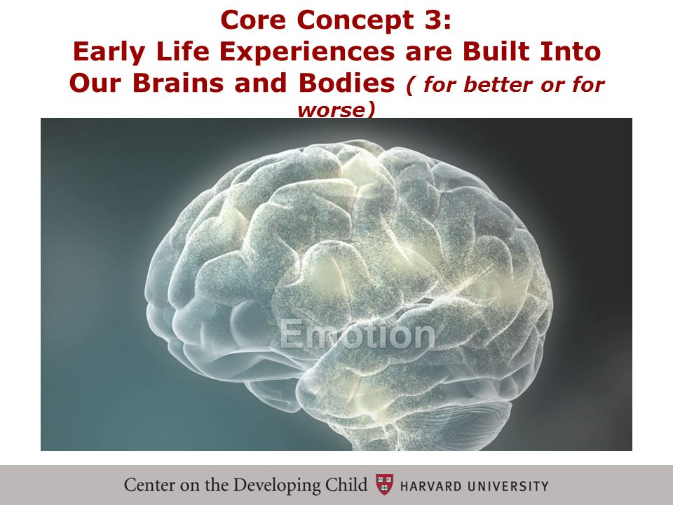 Core Concept 3: Early Life Experiences are Built Into Our Brains and Bodies ( for better or for worse)