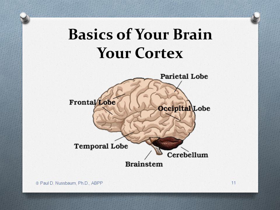 Basics of Your Brain Your Cortex Paul D. Nussbaum, Ph.D., ABPP 11
