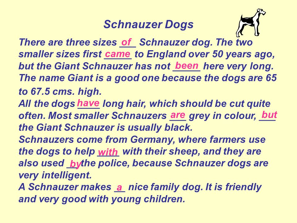 Schnauzer Dogs There are three sizes ___ Schnauzer dog. The two smaller sizes first _____ to England over 50 years ago, but the Giant Schnauzer has no