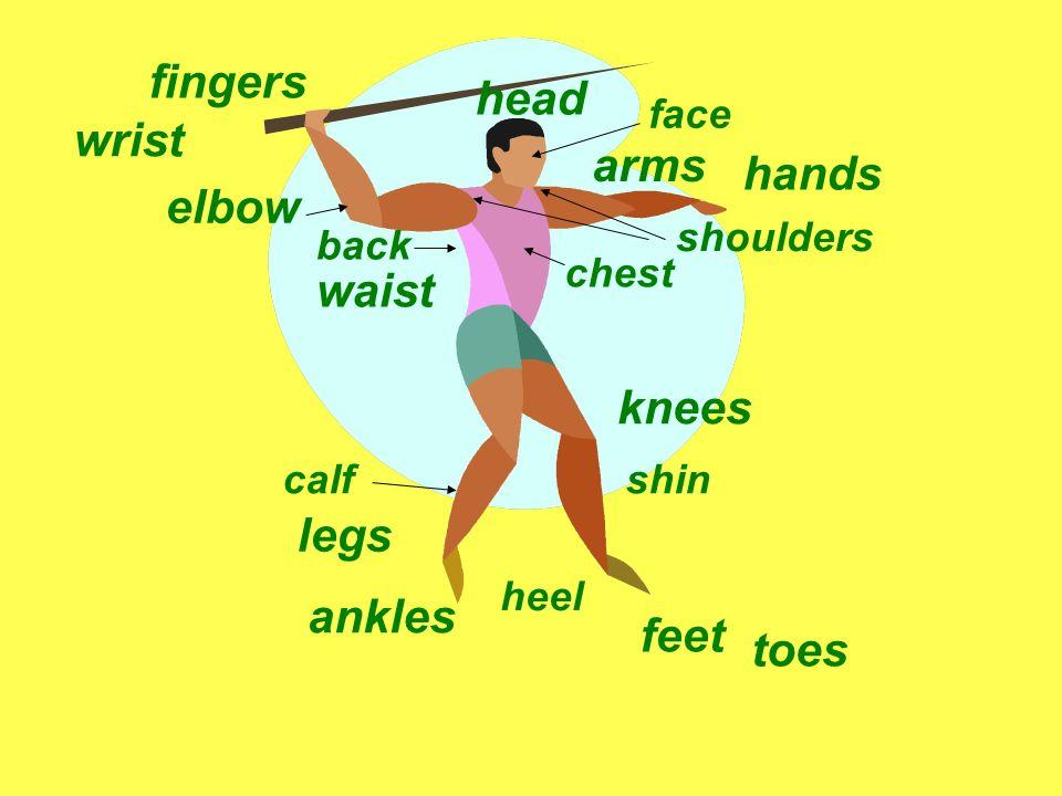 arms legs head feet hands elbow knees wrist ankles fingers toes shoulders waist shincalf heel back chest face