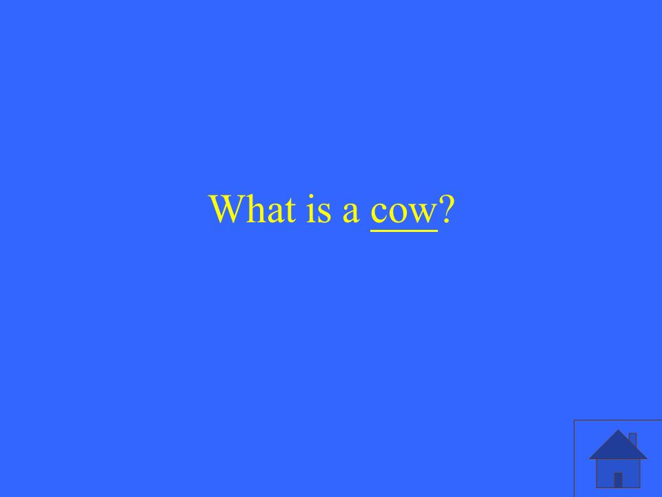 What is a cow
