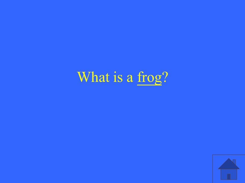 What is a frog