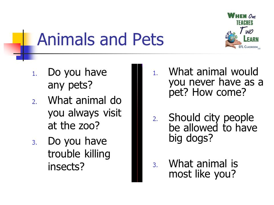 Animals and Pets 1. Do you have any pets? 2. What animal do you always visit at the zoo? 3. Do you have trouble killing insects? 1. What animal would