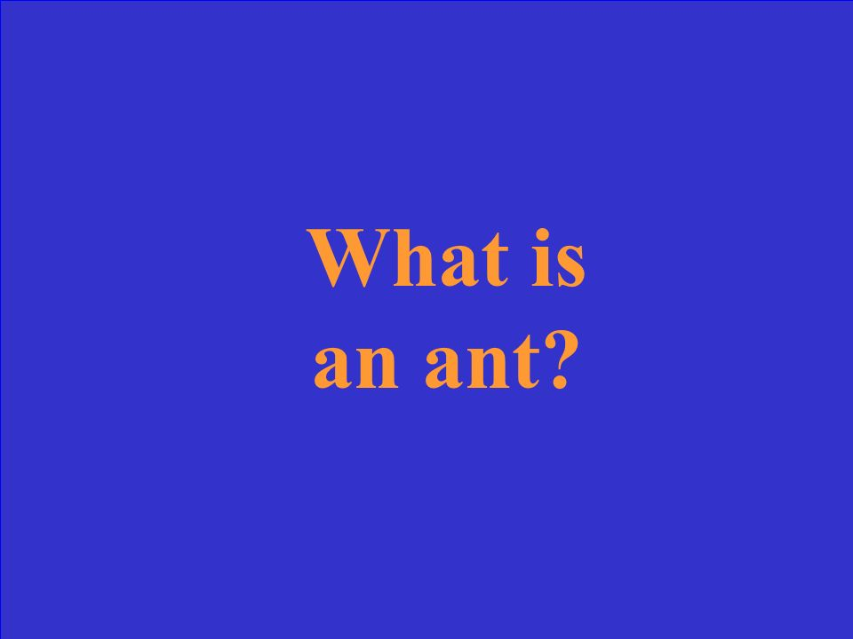 What is an ant?