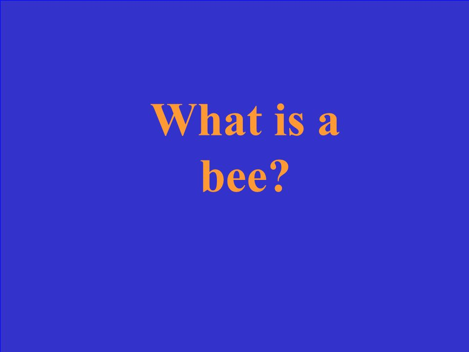 What is a bee?