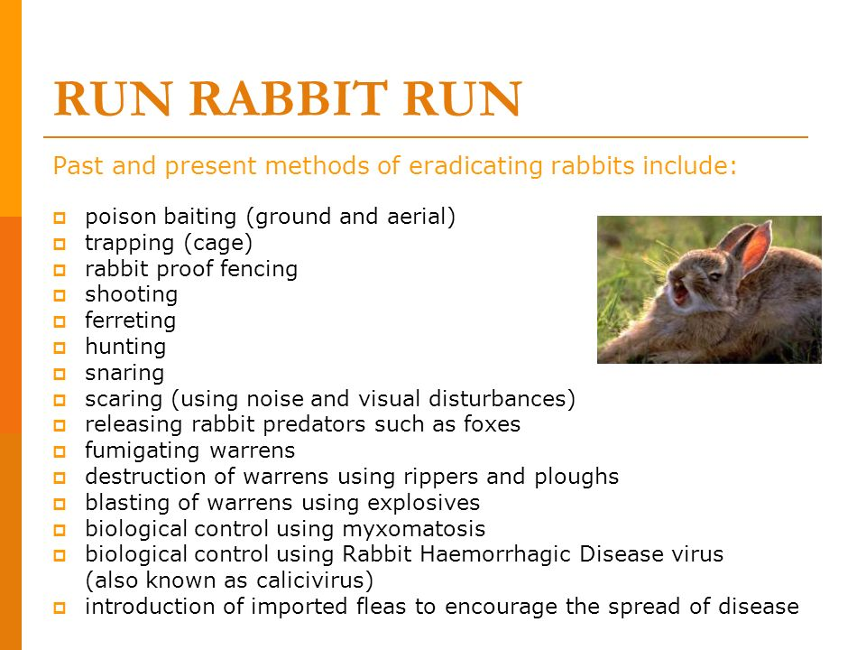 RUN RABBIT RUN Past and present methods of eradicating rabbits include: poison baiting (ground and aerial) trapping (cage) rabbit proof fencing shooti