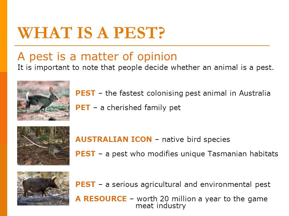 WHAT IS A PEST? A pest is a matter of opinion It is important to note that people decide whether an animal is a pest. PEST – the fastest colonising pe