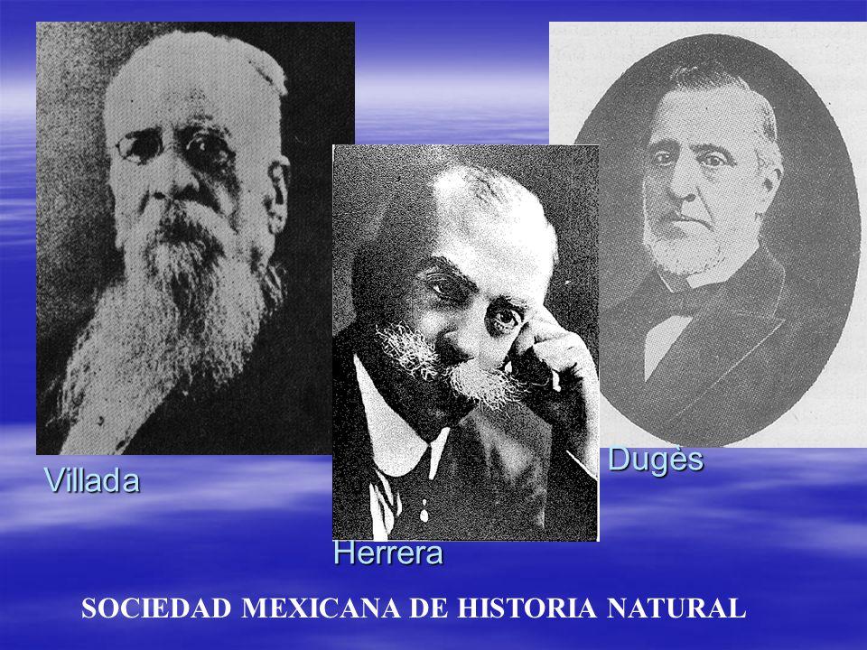 SOCIEDAD MEXICANA DE HISTORIA NATURAL Villada Herrera Dugès
