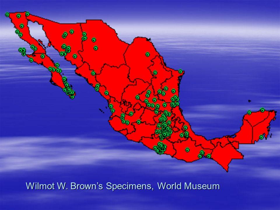 Wilmot W. Browns Specimens, World Museum