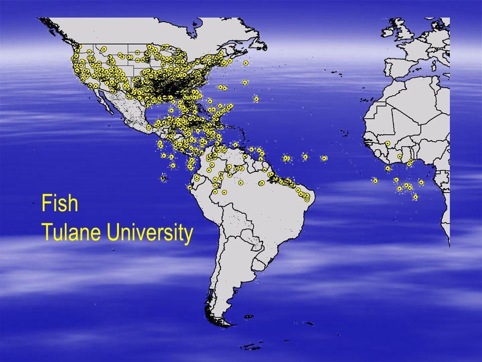 Fish Tulane University