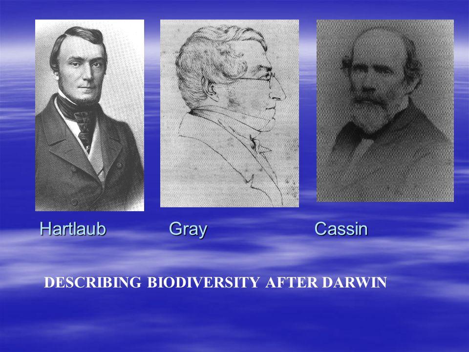 DESCRIBING BIODIVERSITY AFTER DARWIN Hartlaub Gray Cassin