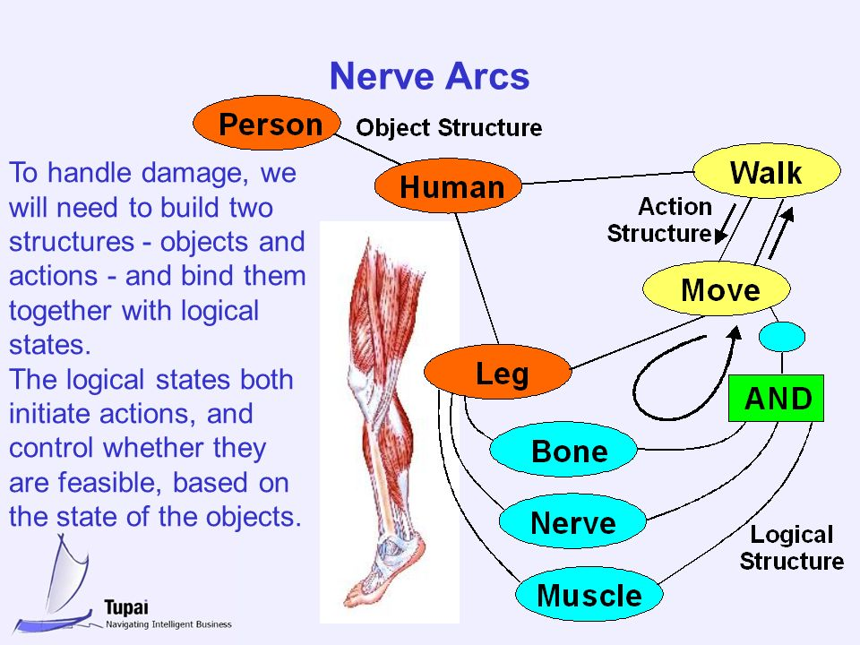 Nerve Arcs To handle damage, we will need to build two structures - objects and actions - and bind them together with logical states. The logical stat