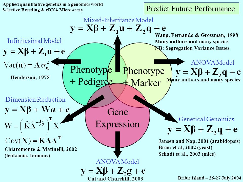 Applied quantitative genetics in a genomics world Selective Breeding & cDNA Microarray Bribie Island – 26-27 July 2004 Phenotype + Pedigree Phenotype