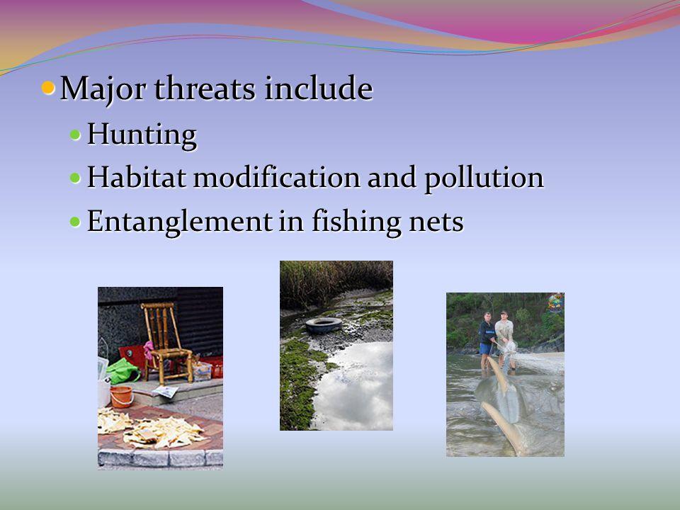 Major threats include Major threats include Hunting Hunting Habitat modification and pollution Habitat modification and pollution Entanglement in fish